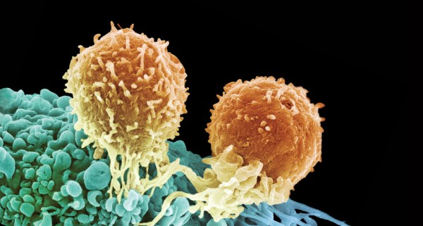 """""""t cells"""""""