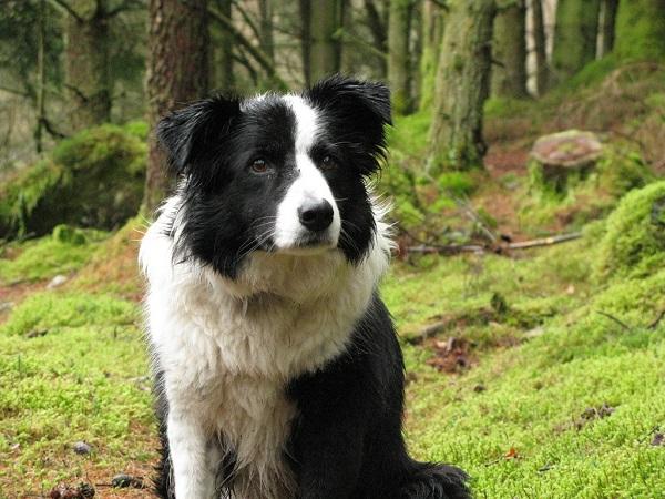 dogs understand human speech