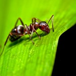 Ants Are the Oldest Plant Farmers