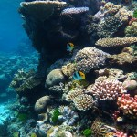 Great Barrier Reef Is Slowly Dying