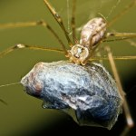 Spiders' Insect Diet Consists of 800 Million Tons Per Year