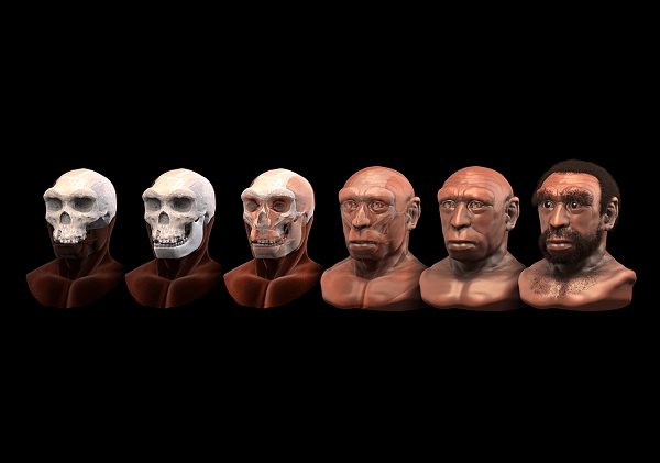 Face reconstruction software