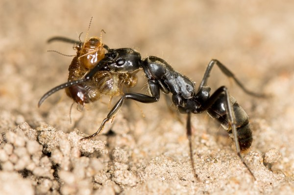 An ant and a termite