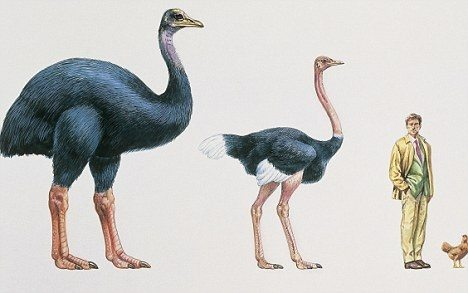 Elephant bird and ostrich