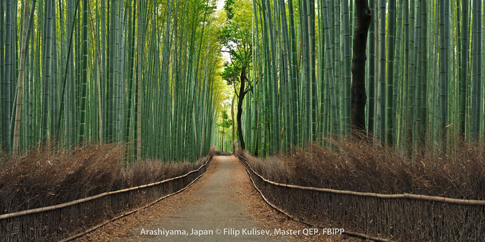 Arashiyama, Japan by Filip Kulisev, Master QEP, FBIPP