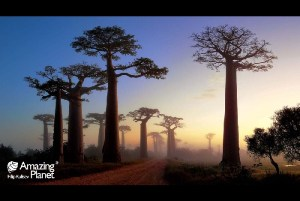 Baobab Alee-Madagascar by Filip Kulisev