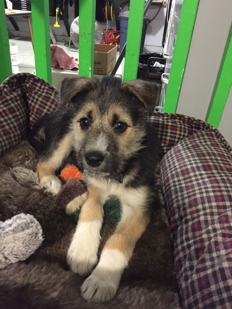 Nellie in Garage | PUPdate