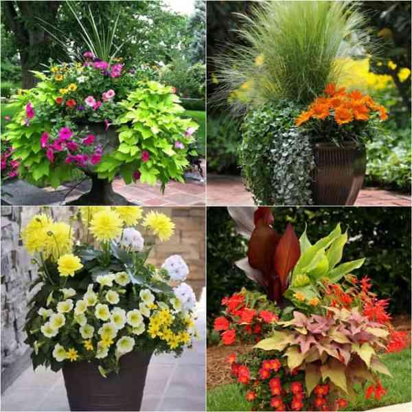 favorite flowering vines