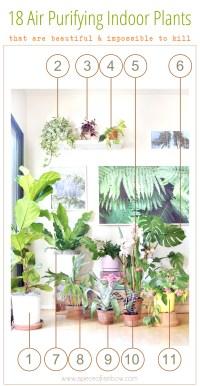 Best Low Light Houseplants