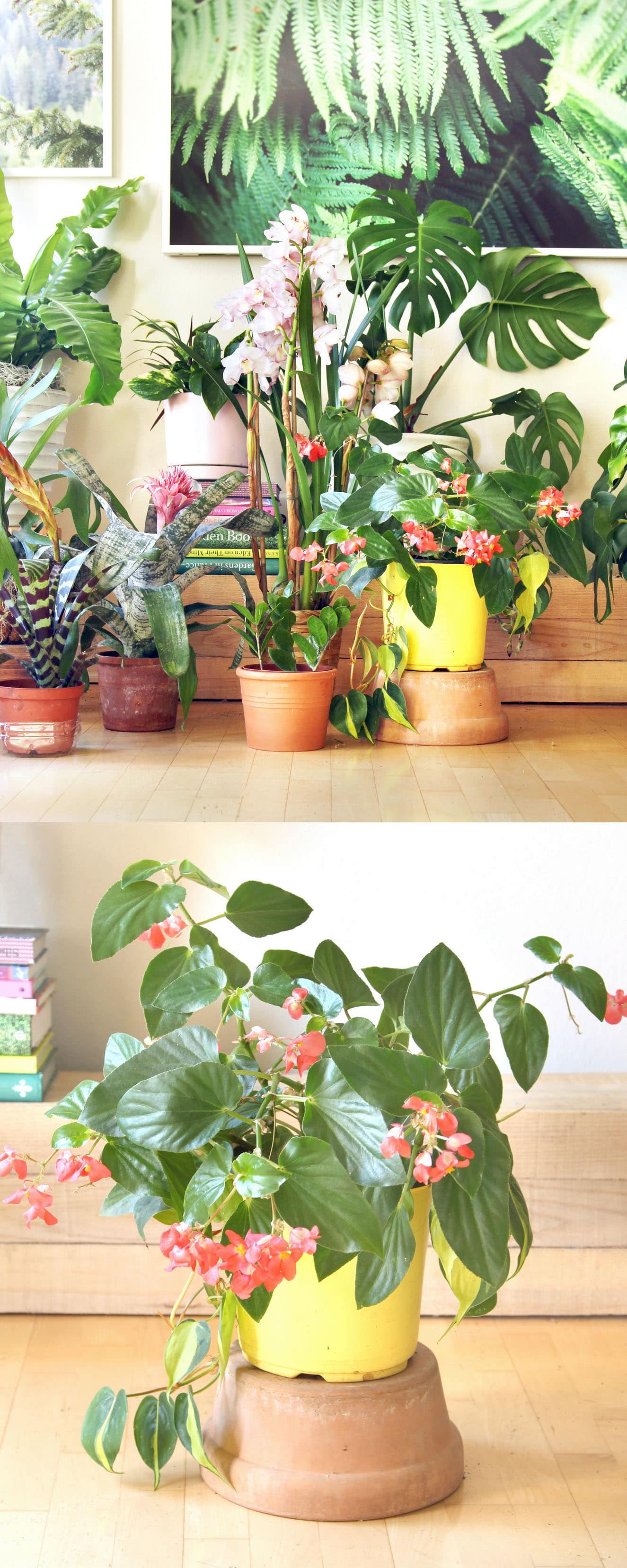 18 Most Beautiful Indoor Plants 5 Easy Care Tips A Piece Of Rainbow