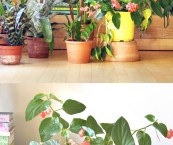 foliage house plants pictures