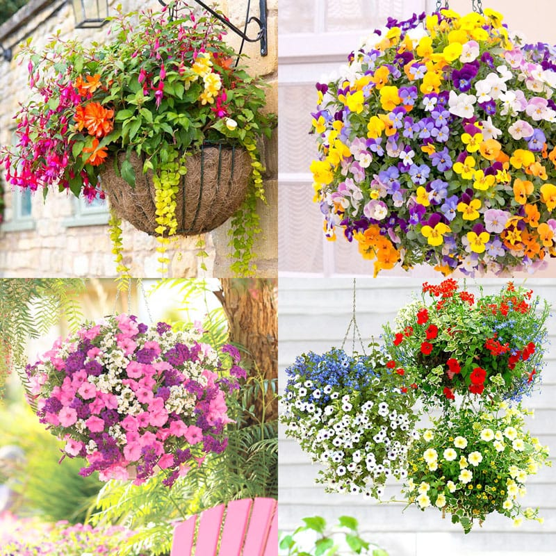 As A Garden Designer I Often Meet Great Gardeners And Growers Who Share With Me Their Best Secrets To Growing Beautiful Hanging Baskets Which I Cant