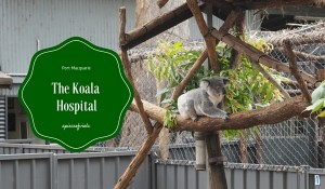 The Koala Hospital | Port Macquarie