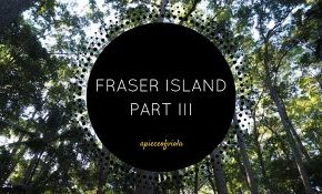 Fraser Island Part III | Cool Dingo Tours