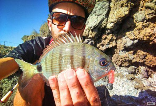 Sargo-rockfishing-sparidae-APDV