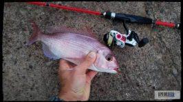 sama-pluma-rockfishing