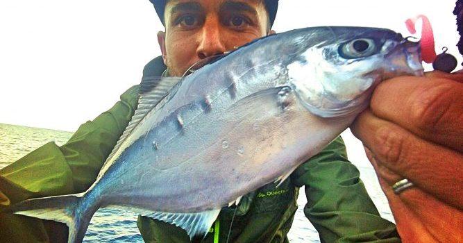 I Sparidae-log. Vinilos para Rockfishing – Mayo 2018