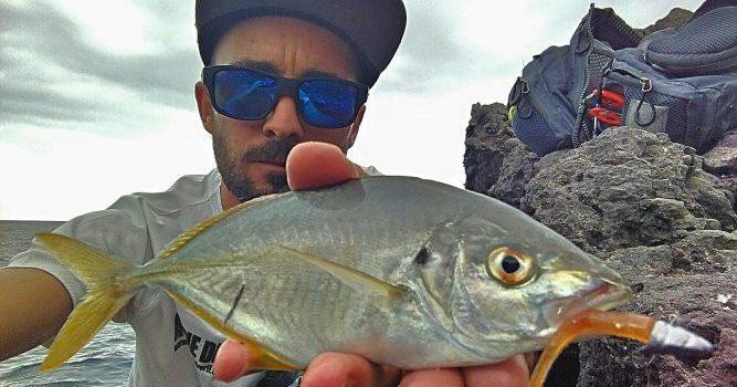 4 log Sparidae – Vinilos artesanales para Rockfishing. Septiembre