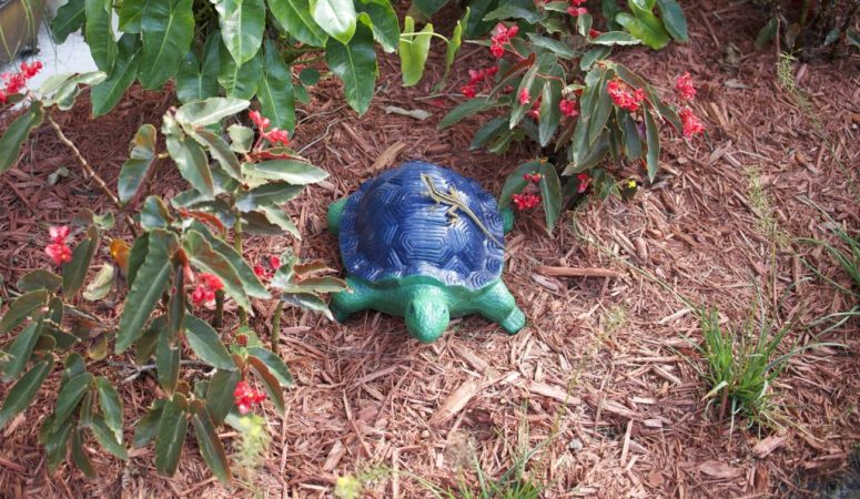 Earth Day - Turtle with Jesus Lizard