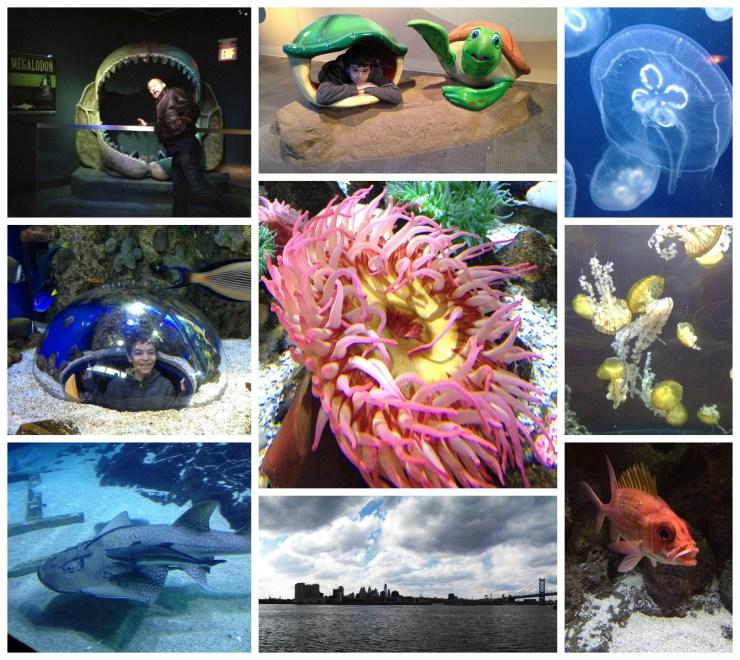 Camden Aquarium -