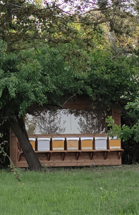 apiario-benessere-porto-tollo