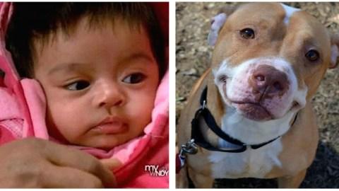 Σκύλος-ήρωας έσωσε το μωρό και τη μάνα από τους οπλισμένους κλέφτες! (ΒΙΝΤΕΟ)