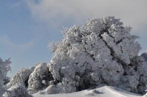 Πανέμορφοι σχηματισμού πάγου πάνω στα κλαδιά
