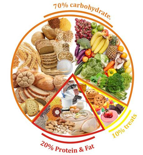 what is needed in a complete diet