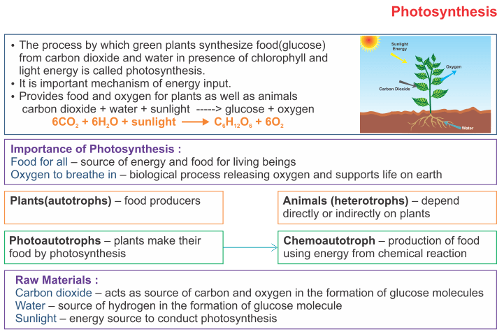 Icse solutions for class 10 biology photosynthesis a plus topper icse solutions for class 10 biology photosynthesis ccuart Image collections