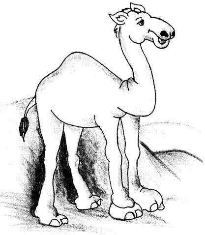 Camel Essay