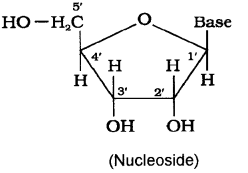 Plus Two Chemistry Chapter Wise Previous Questions Chapter 14 Biomolecules 8