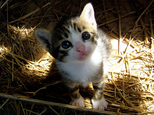 cute pet photographs 33
