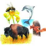 Krafttier – Delphin, Eichhörnchen, Büffel, Biene