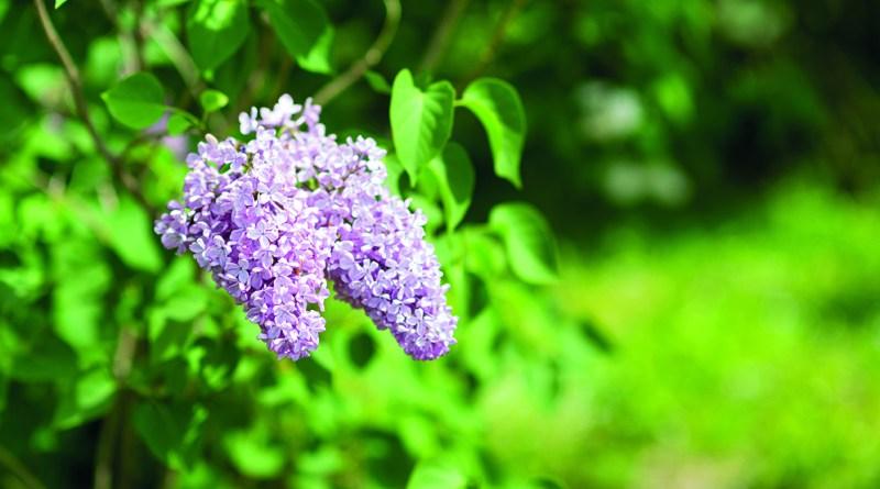 Blume in der Blüte - Buchtipps für den Frühling