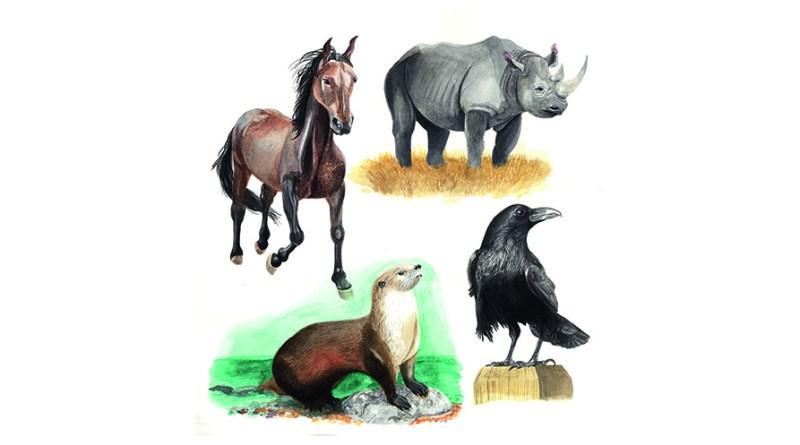 Krafttier - Pferd, Nashorn, Otter und Rabe