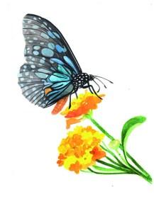 Entdecke dein Krafttier - Schmetterling