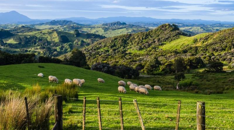 Tohonga - Die Medizinmänner Neuseelands