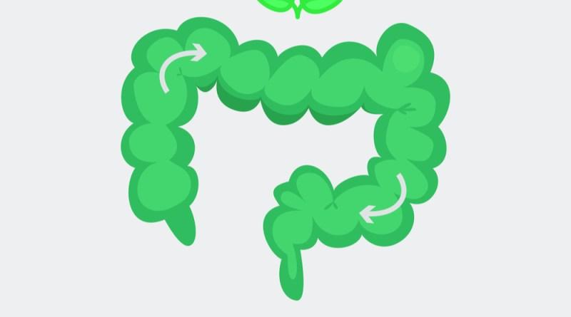 Illustration eines gesunden Darms. Grüner Darm. Frühjahrsputz Darm