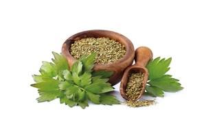 Liebstöckelpflanze auf weißem Hintergrund. Getrockneter Liebstöckel in Holzschüssel. Vitalstoffe