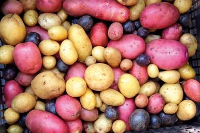 Kartoffel_1459344362