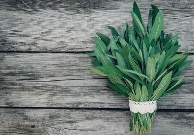 Heilpflanze des Monats Salbei