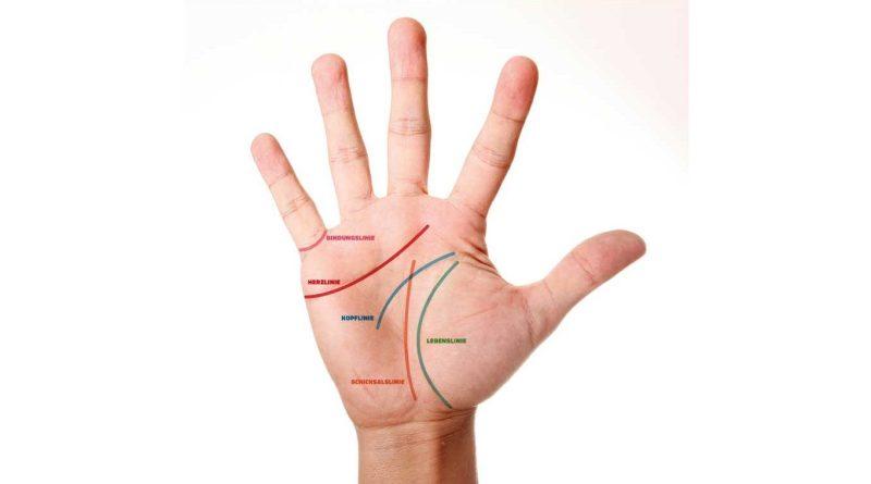 Hand mit Linien eingezeichnet. Lebenslinie, Herzlinie, Bindungslinie, Kopflinie. Schicksalslinie. Lebenslinie. Linienlesen. Handlesen