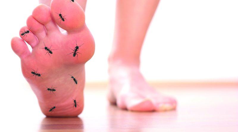 Darstellung von Ameisenlaufen. Ameisen kabbeln auf Fuß. Fußkribbeln. Nervenschmerzen