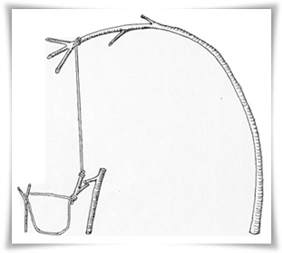 How to Build a Snare for Trapping Small Food Animals for