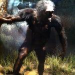 Google a rămas tot la teoria evoluționistă, omagiind o maimuță, Lucy (Australopithecus). Concluzii științifice anti-evoluționism