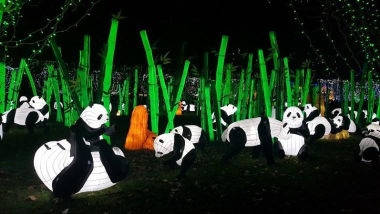 festival des lanternes gaillac panda