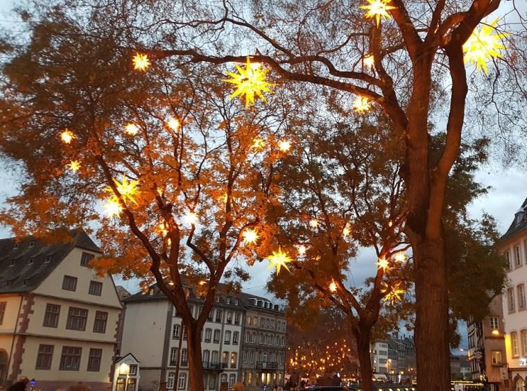 étoiles dans les arbres