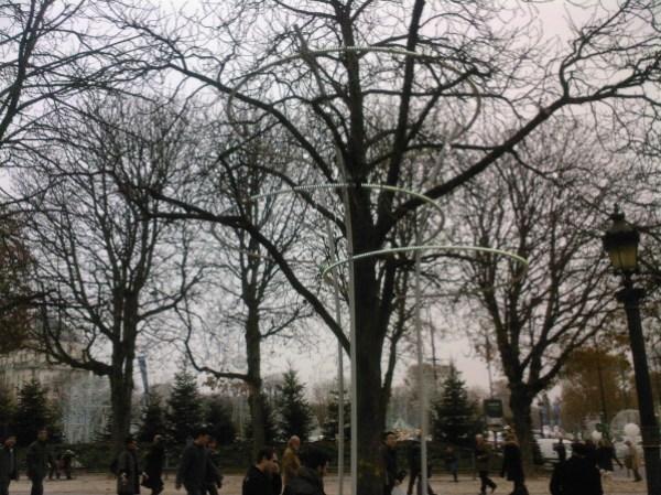 arbre-champs-elysees.jpg