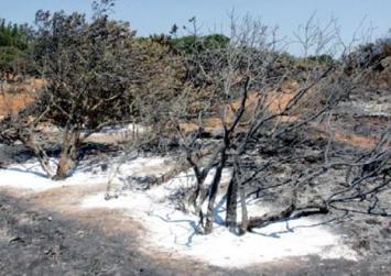 Στάχτη έγιναν 35.000 μαστιχόδεντρα στην Χίο