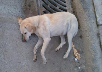 Πρόστιμο 60.000 ευρώ σε άνδρα που δηλητηρίασε σκυλιά!